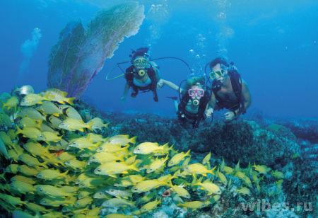 Bahamas dive